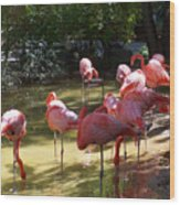 Flamingo Land Wood Print