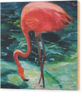 Flamingo Of Homasassa Wood Print