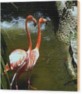 Flamingo Pair Wood Print