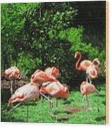 Flamingo Party Wood Print