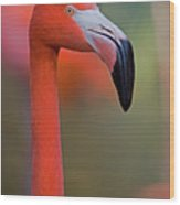Flamingo Portrait - Sacramento Zoo Wood Print