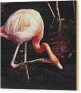 Flamingo Scratching Head Wood Print
