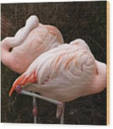 Flamingo Siesta Wood Print