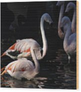 Flamingo Study - 2 Wood Print