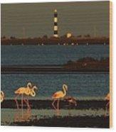Flamingo Sunrise Wood Print