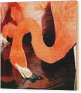 Flamingo Taking A Dip Wood Print