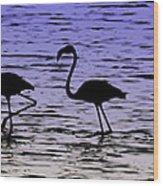 Flamingo Walk - Venezuela Wood Print
