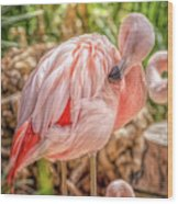 Flamingo2 Wood Print