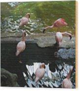 Flamingoes At The Zoo Wood Print