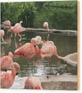 Flamingoes Looking Oh So Pretty  Wood Print