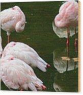 Flamingos 10 Wood Print