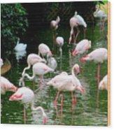 Flamingos 6 Wood Print