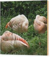 Flamingo's At Rest Wood Print