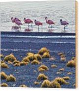 Flamingos At Torres Del Paine Wood Print