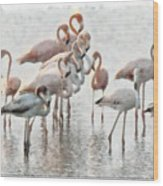 Flamingos Family Wood Print