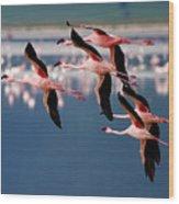 Flamingos In Flight-signed Wood Print