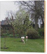 Flamingos On The Lawn Wood Print