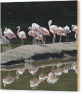 Flamingos With Reflection Wood Print