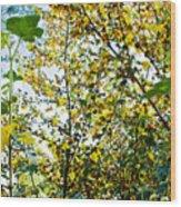 California Glory At Pilgrim Place In Claremont-california  Wood Print