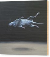 Floating Field Mouse Wood Print
