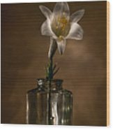 Flashlight Series Easter Lily 3 Wood Print