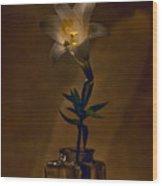 Flashlight Series Easter Lily 4 Wood Print