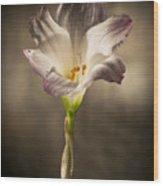 Flashlight Series White Flower 4 Wood Print