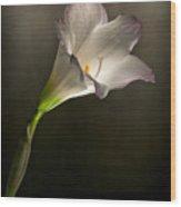 Flashlight Series White Flower 5 Wood Print