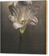 Flashlight Series White Flower 6 Wood Print