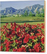 210546-v-flatirons And Flowers V  Wood Print