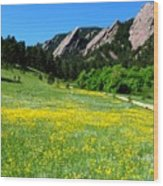 Flatirons And Yellow Meadow Wood Print