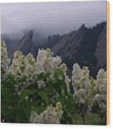 Flatirons White Lilacs Wood Print