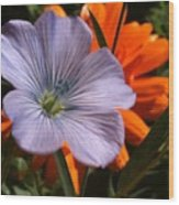 Flax And Aster Wood Print