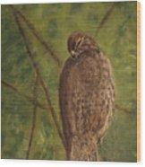Fledged Red-shouldered Hawk Wood Print