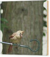 Fledgling Cardinal Wood Print