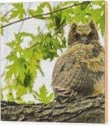 Fledgling Great Horned Owl Wood Print