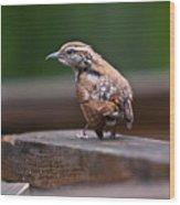 Fledgling Wren 1 Wood Print