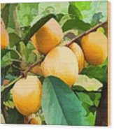 Fleshy Yellow Plums On The Branch Wood Print