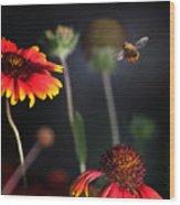 Flight Of A Honey Bee Wood Print