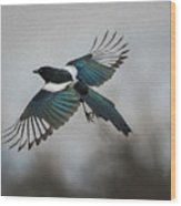 Flight Of A Magpie Wood Print