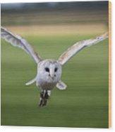 Flight Of The Barn Owl Wood Print