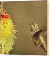 Flight Of The Hummer Wood Print