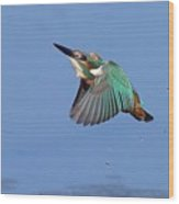 Flight Of The Kingfisher Wood Print