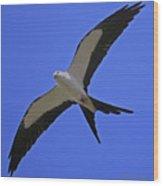 Flight Of The Kite Wood Print