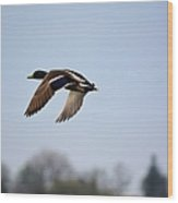 Flight Of The Mallard Wood Print