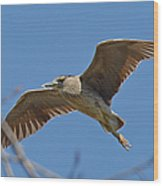 Flight Of The Night Heron Wood Print