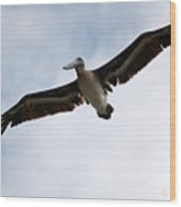 Flight Of The Pelican Wood Print