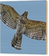 Flight Of The Red Shouldered Hawk Wood Print