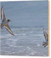 Flight Of The Sanderlings Wood Print
