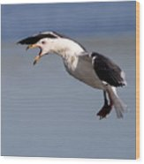 Flight Of The Screaming Gull . 7d4934 Wood Print